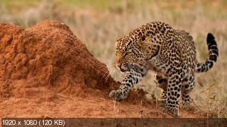 Африканские охотники / Africa's Hunters [1 сезон (6)] 2017 HDTVRip 1080p