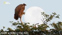 Слон: Король Калахари (2016) HDTV